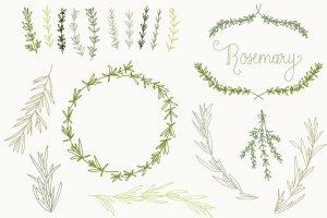 婚礼请柬迷迭香手绘剪贴画及矢量图  Rosemary Clip Art & Vectors插图3