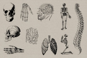 50个老式人体解剖矢量插图 Vintage Anatomy Vectors插图5