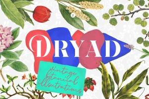 45款植物水彩手绘插画PNG素材 Dryad – Botanical Illustrations插图1