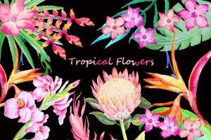 手绘水彩热带叶状花素材 Watercolor Tropical Foliage Flowers插图1