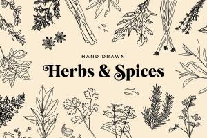 20+草药和香料手绘图案设计素材 Hand Drawn Herbs & Spices插图(1)