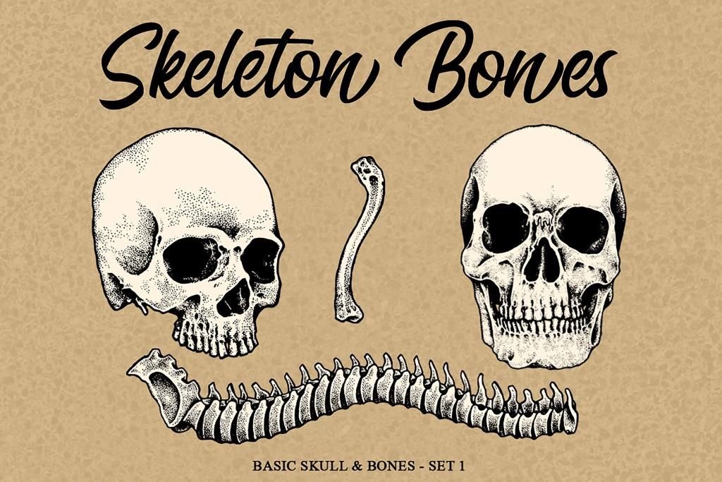 头骨&骨头手绘矢量插画素材 Skeleton handrawn 1插图