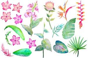 手绘水彩热带叶状花素材 Watercolor Tropical Foliage Flowers插图4
