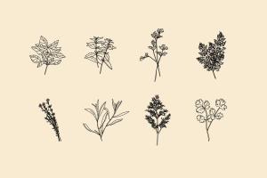 20+草药和香料手绘图案设计素材 Hand Drawn Herbs & Spices插图(4)