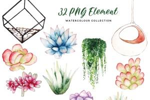多肉植物水彩手绘图案PNG图片素材 Succulent Terrarium Watercolor插图6