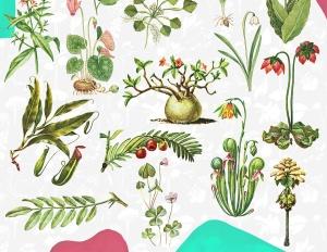 45款植物水彩手绘插画PNG素材 Dryad – Botanical Illustrations插图4