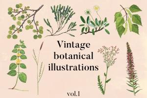 古籍书本植物手绘插画PNG素材v1 Vintage Botanical Illustrations Vol.1插图1