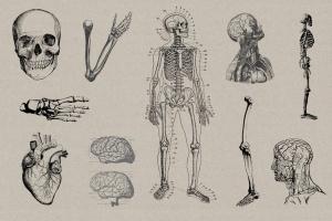 50个老式人体解剖矢量插图 Vintage Anatomy Vectors插图3