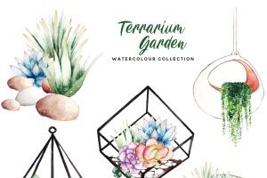 多肉植物水彩手绘图案PNG图片素材 Succulent Terrarium Watercolor插图5