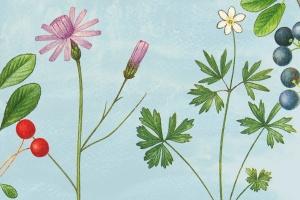 古籍书本植物手绘插画PNG素材v2 Vintage Botanical Illustrations Vol.2插图2