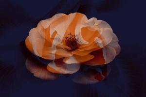 15款优雅花卉图案PS笔刷 Elegant Flower Brushes for Photoshop插图2