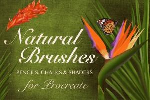 20种超级多功能Procreate笔刷合集[铅笔/粉笔/着色器] Natural Brushes for Procreate插图1