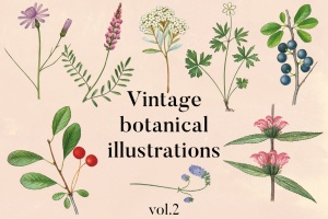 古籍书本植物手绘插画PNG素材v2 Vintage Botanical Illustrations Vol.2插图1