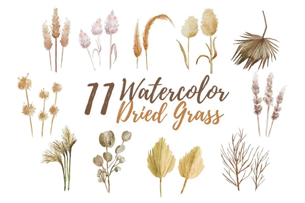 11款热带干草水彩剪贴画&装饰元素 11 Watercolor Dried Grass Illustration Graphics插图
