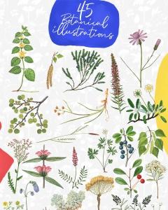 45款植物水彩手绘插画PNG素材 Dryad – Botanical Illustrations插图2