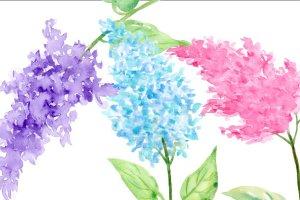 水彩丁香花剪贴画素材 Watercolor Lilac Flowers插图3