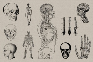 50个老式人体解剖矢量插图 Vintage Anatomy Vectors插图6